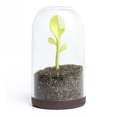 Sprout Jar